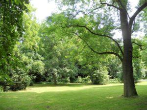 Der Stadtpark war bis 1851 ein Friedhof.
