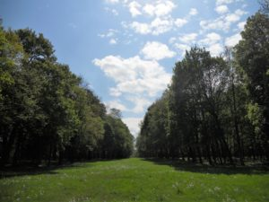 Der Schlosspark schließt sich an den Südflügel des Schlosses an.