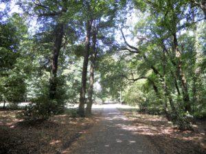 An eine Parkanlage erinnert nicht mehr viel, bis auf vereinzelte Rhododendren.
