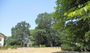 Hinter dem Schloss liegt der dazugehörende Park, der im englischen Stil angelegt wurde.